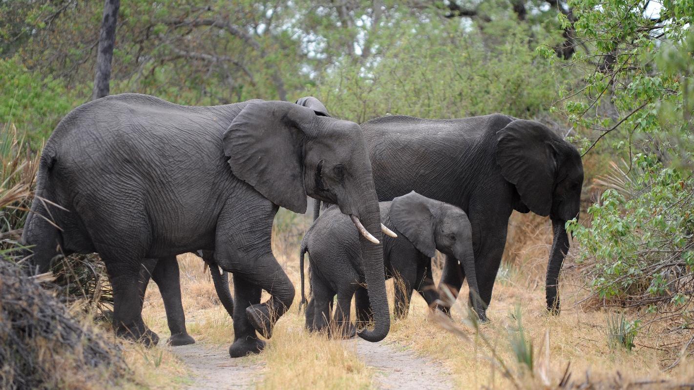 První sloni